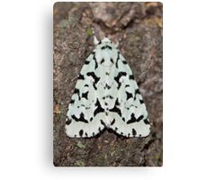Green Marvel Dagger Moth IMG_1121  Canvas Print