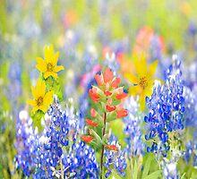 Wildflower Scarf by Bonnie T.  Barry