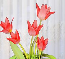 Get Well Tulips by Kenneth Hoffman