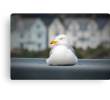 Rooftop gull Canvas Print