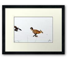 Fox Trot 2 Framed Print