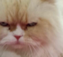 Angry Cat Sticker