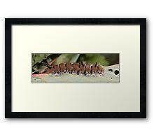 Fingered Dagger Moth Caterpillar Framed Print