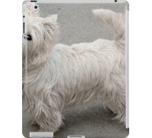 Random West Highland White Terrier