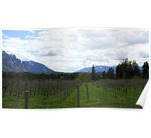 Orchards and Mountains Poster