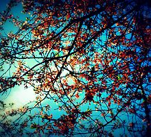 Blossoms by Oranje