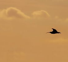 Curlews Return by Brian Avery