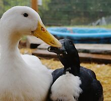 Ducky Kisses by DuckDuckDog