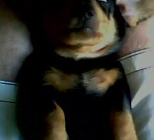 Puppy by burningdesire