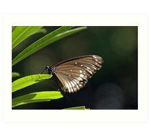 Butterfly in the garden Art Print
