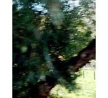 Tree Elf DMT Photographic Print