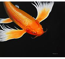 Coy Koi Photographic Print