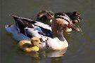 Duck with Ducklings by Jo Nijenhuis