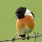 Stonechat - II by Peter Wiggerman