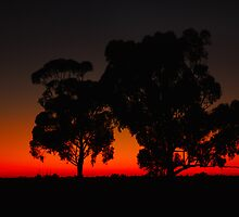 Before dawn - Deniliquin by wildplaces