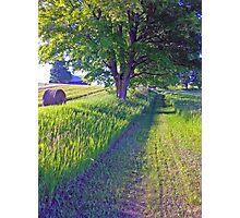 Hay Day Photographic Print