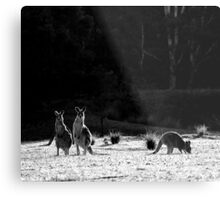I know...I know...but aren't they cute! Metal Print