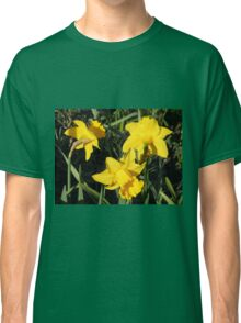 Daffodils Dreaming Classic T-Shirt