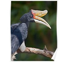 I Love My Beak... Poster