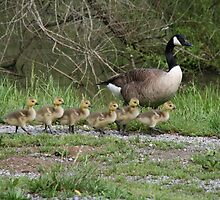 Little babes all in a row by Wanda Faircloth