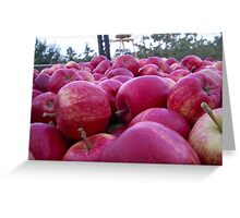 Bin full of Gala apples Greeting Card