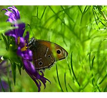 """Just living is not enough,"" said the butterfly, ""one must have sunshine, freedom and a little flower."" Photographic Print"