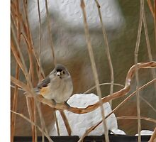 Winter Perch ~ Bird with Birdhouse ~ Digital Painting by roadsidestills