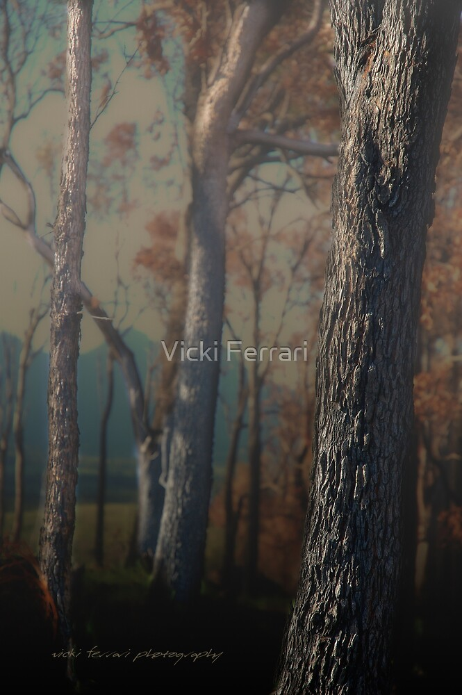 Hidden Forest © by Vicki Ferrari