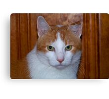 Dignified Max Canvas Print