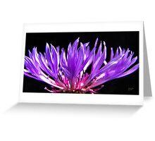 Meerkerk Garden Blossom Greeting Card