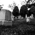 Gravestones & Three Trees by Gregory Colvin