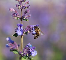Violet paradise by Lidija Lolic