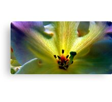 Fireflower Three Canvas Print