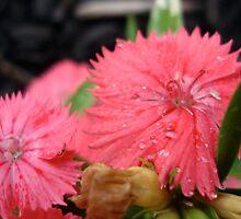 Flowers Dressed in Pink by Nippyfish