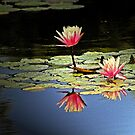 ~uplifting~ by Terri~Lynn Bealle
