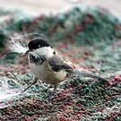 Nesting material by SKNickel