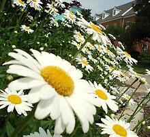 Daisy Day by Nippyfish