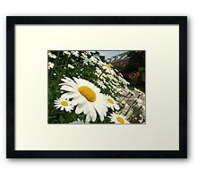 Daisy Day Framed Print