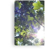The Sun On My Face Canvas Print