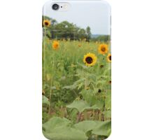 Field of sunflowers iPhone Case/Skin