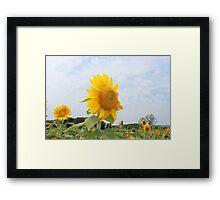 Sunflower Sky Framed Print