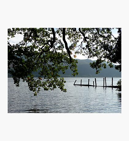 Foliage above the water Photographic Print