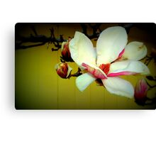 Magnolia - Lomo Canvas Print