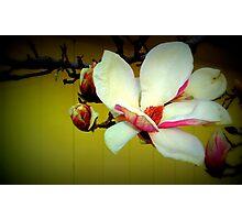 Magnolia - Lomo Photographic Print