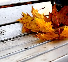 Autumn by CerbeR2008