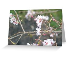 Japanese Cherry Greeting Card