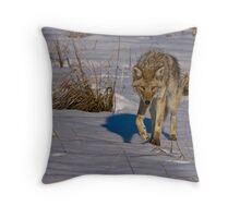 Curious Coyote Throw Pillow