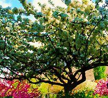 Princess Tree by Oranje