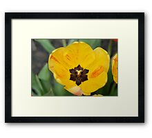 Stop and Smell the Yellow Framed Print