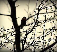 Bird in a Thorny Tree by Bill Lighterness